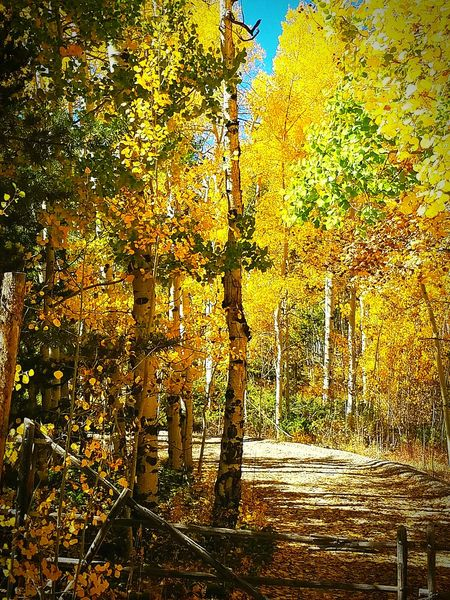 No People Backgrounds Gold Colored Full Frame Beauty In Nature Outdoors Nature What A View Clear Sky Beauty Around Me Autumn Colors Fall Colors Textured  Beautiful Day Tranquil Scene Taking Photos Check This Out 😊 Unbelievable Hidden Paradise Hidden Treasure Hidden Road Fence