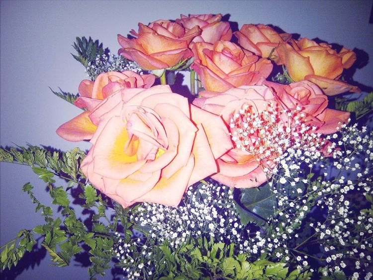 Roses As A Gift