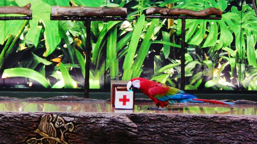 Parrot Show LoroParque EyeEm Animal Lover Animal_collection Parrot Lover