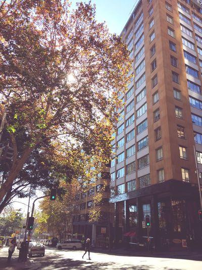 Sydney Autumn