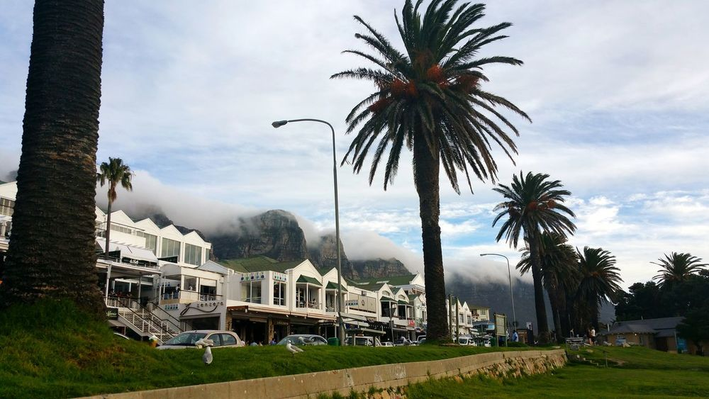 Palm Tree Architecture Outdoors EyeEmNewHere Foamy Clouds Foamy Mountains Clouds Over Mountains Cape Town, South Africa Cape Town Table Mountain Capture The Moment Landscape Amazing View Beautiful Mountain Nature Architecture Wonderful View Extraordinary Nature Scenics Landscape Sky And Clouds Mountain View Mountain Lost In The Landscape