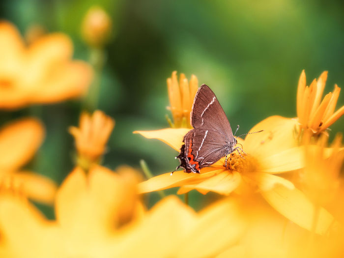 Animal Animal Themes Animal Wildlife Animal Wing Animals In The Wild Beauty In Nature Butterfly - Insect Close-up Flower Flower Head Flowering Plant Fragility Freshness Growth Insect Invertebrate No People One Animal Outdoors Petal Plant Pollen Pollination Selective Focus Vulnerability