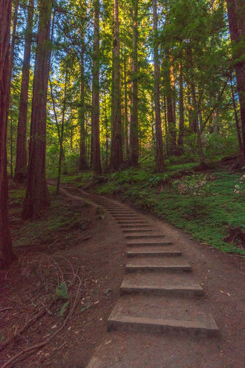 Redwoods Forest Tree Plant Land Direction The Way Forward Nature Trunk Tranquility Tree Trunk No People Growth Day WoodLand Beauty In Nature Staircase Tranquil Scene Wood - Material Scenics - Nature Non-urban Scene Outdoors
