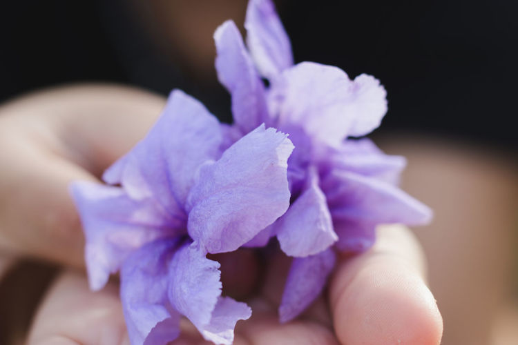 Flower One Person Flowering Plant Human Body Part Purple Close-up Hand Body Part Human Hand Freshness Vulnerability  Real People Fragility Plant Finger Beauty In Nature Petal Lifestyles Flower Head Human Limb