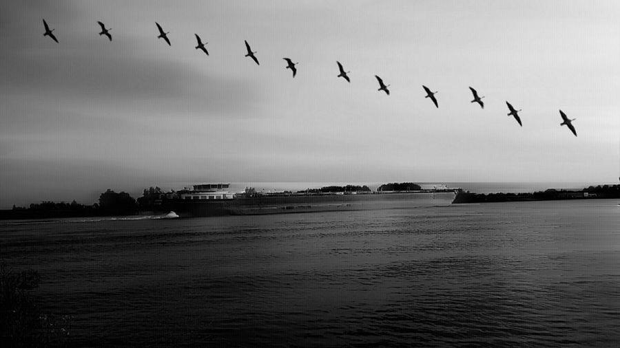 Birds flying over river against sky