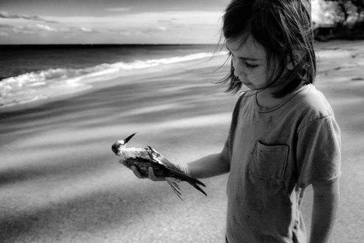 Cute girl holding dead bird while standing at beach
