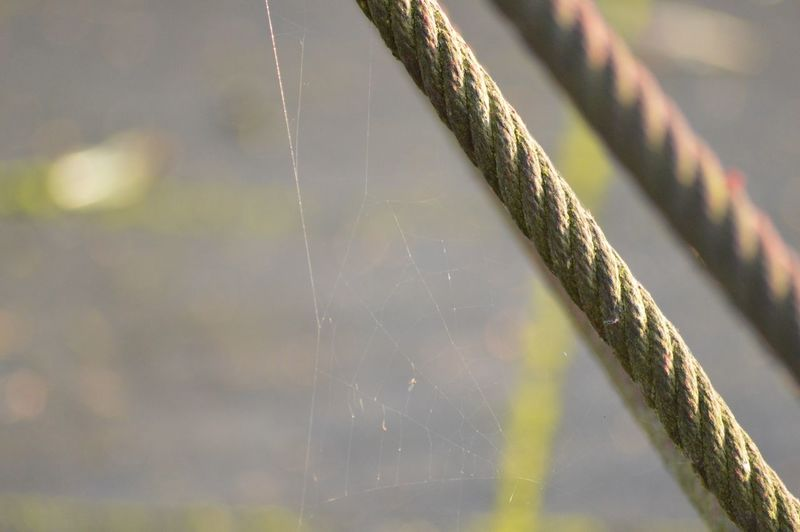 Close-up of spider web by climbing frame cable