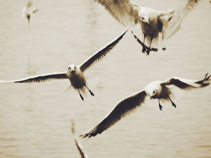 Seagulls flying over the water