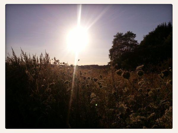 Sonne Spaziergang natur