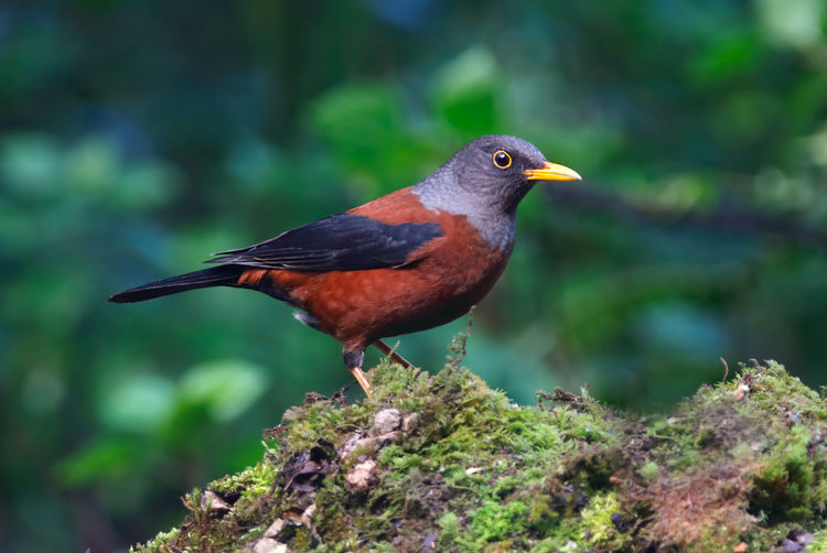 Bird Animal Themes Animal Wildlife Animal Animals In The Wild Vertebrate One Animal Perching Day No People Close-up Focus On Foreground Robin Nature Outdoors Beak Plant Beauty In Nature Selective Focus Side View