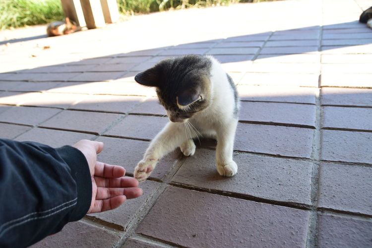 Full length of hand holding cat on footpath