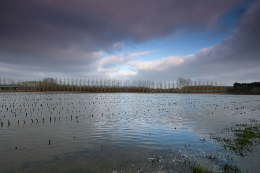 Water Cloud - Sky Sky Scenics - Nature Tranquility Beauty In Nature Tranquil Scene Lake No People Nature Non-urban Scene Reflection Plant Day Animal Wildlife Outdoors Animal Bird Swamp