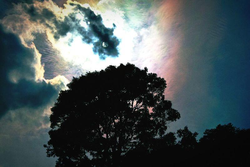 天有異象,一尾魚的行徑 Sky