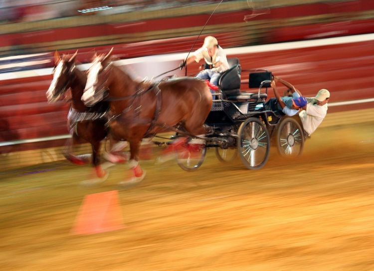 Chariot Chariot Race Horse Horses Ben Hur Faster Fast Moving Event