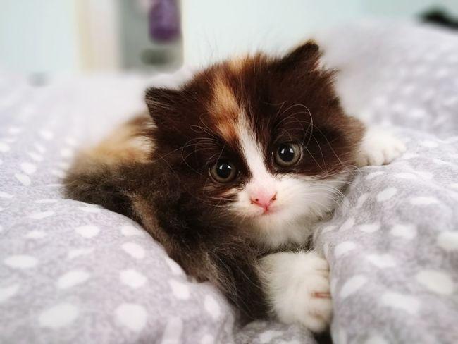 QQ my new kitten Cat Cat Lovers Animal Pets Pet Photography  Pet Love Kitten No People