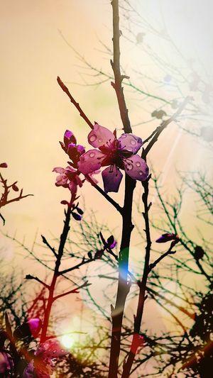Spring Spring Flowers Blooming Flower Blooming Trees Sunshine Purple Flower Purple Blossoms Rain Flower After Rain...