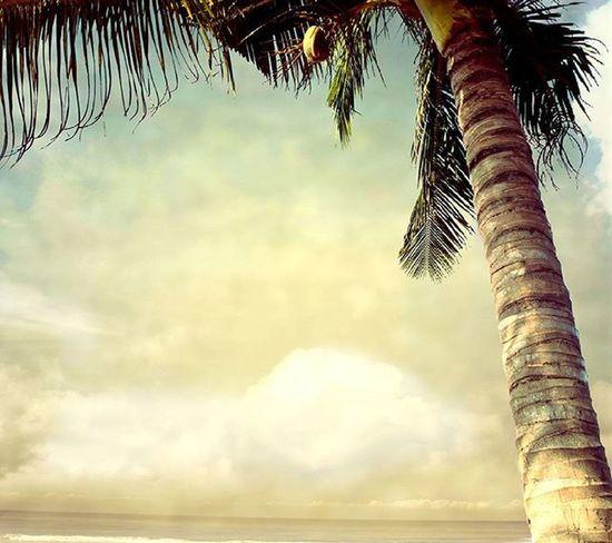 Buen dia a continuacion los destinos todos de emision inmediata. Trinidad y Tobago Bogota Panama Grenada Manta Guayaquil Quito Aruba Curazao Miami Madrid Argentina República dominicana Los mejores precios del mercado ✈ Inf +584145935973