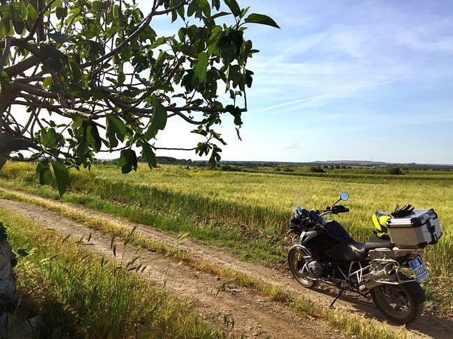 Natura Whiteroads Motorcycles Grano Campo Freedom