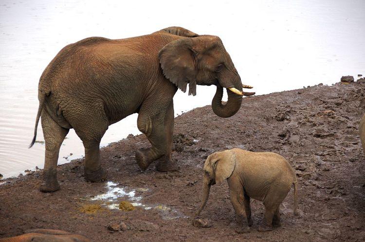 Fatherhood Moments Elephants Elephants Playing Animal Themes Travel Photography Rickeherbertphotography