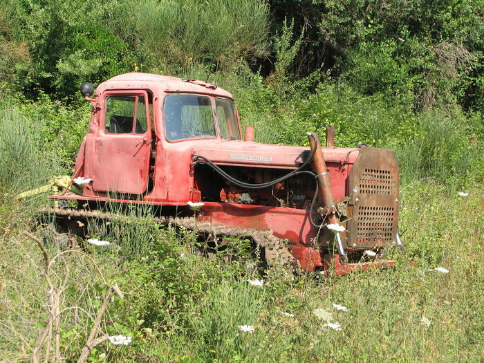 Catpillar Tractor Abandoned Animal Themes Combine Harvester Day Field Grass Growth Land Vehicle Landscape Mammal Mode Of Transport Nature No People Outdoors Plant Red Tractor Transportation