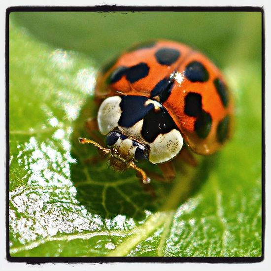 Insects  Nature