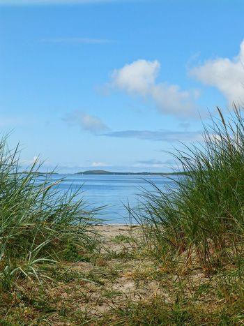 Mull Of Kintyre Beach beac Beachphotography Grass Grasses Green Grass Sand Dunes Sand rushes Rushes Blue Sky sxot Scotland Argyll Bute