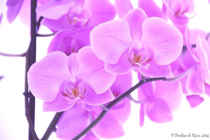 Flowers Orchids Still Life Still Life Photography StillLifePhotography Nature