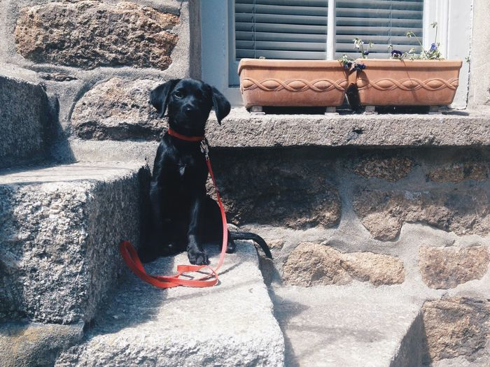 Portrait of black dog sitting on steps