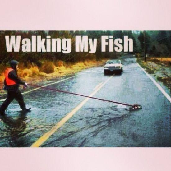 Just Walking My Fish