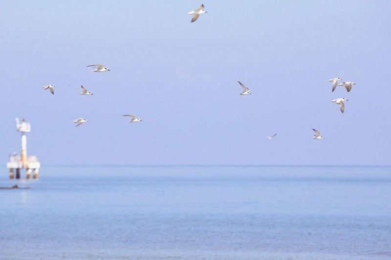 Sea&sky Fly Flying Bird Flying Seagull ın Flıght SEAGULL IN FLIGHT Seagulls And Sea Seagull Seagulls Wildlife & Nature Wildlife