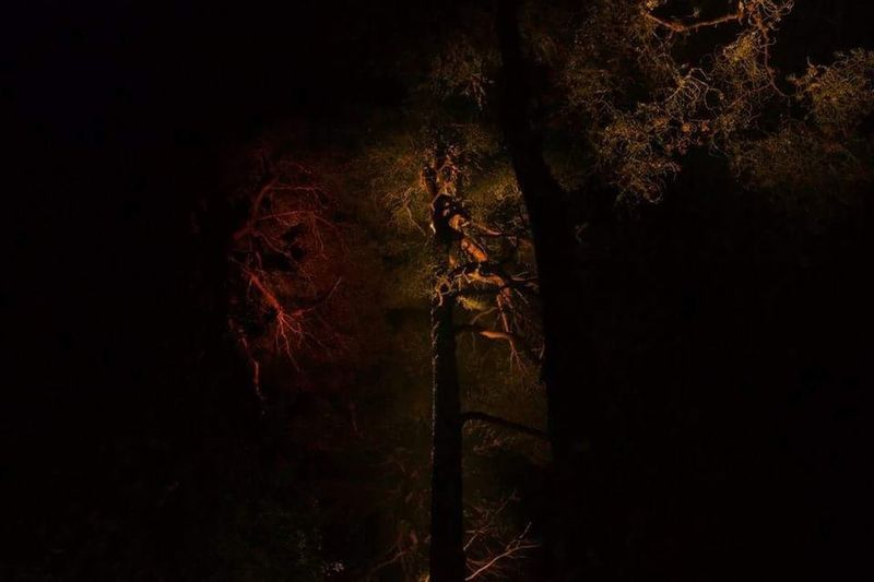 View of trees against the dark