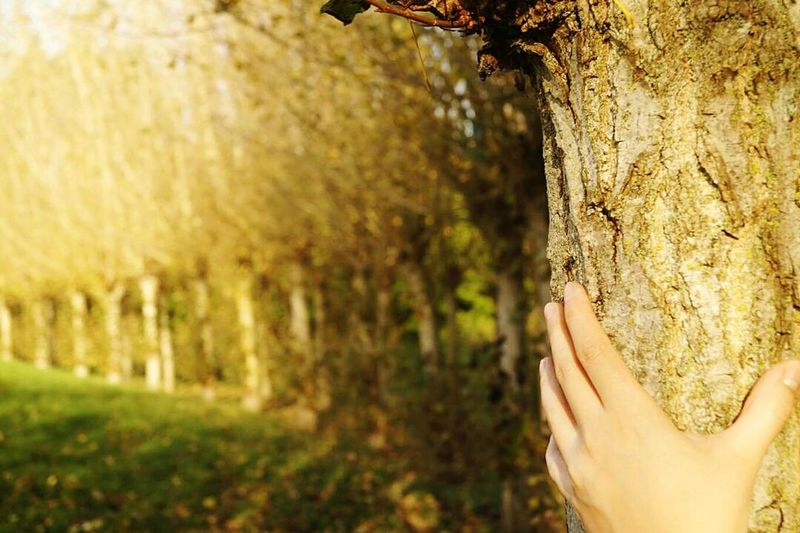 One Person Day Human Body Part Outdoors Nature Human Hand Women Close-up Tree Photooftheday Branch Freshness Sony Alpha Sonyphotography Jesień Jesiennyspacer Jesienne Liście Piekniejest Naturelovers Nature_collection Autumn Fromwhereistand Tree Nature Frommypointofview Inner Power