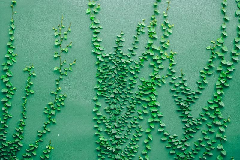Full frame shot of wet leaf against wall