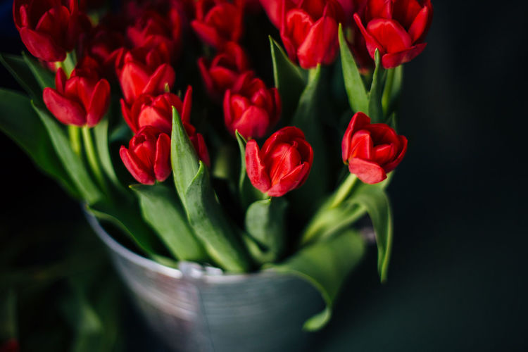 High angle view of red tulips on bucket against black background