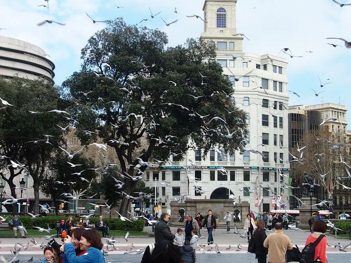Plaza City Tree