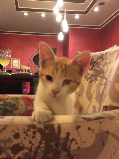 Kedi Cat First Eyeem Photo