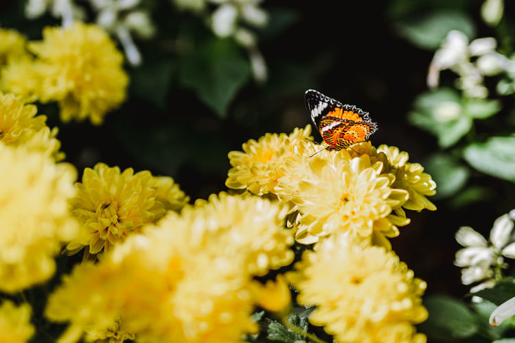 Butterfly. Flower Flowering Plant Fragility Vulnerability  Plant Animal Themes Insect Invertebrate Beauty In Nature Freshness Yellow Animal Wildlife Animal Petal Animals In The Wild One Animal Flower Head Growth Close-up Inflorescence Pollination No People Animal Wing Butterfly - Insect Pollen