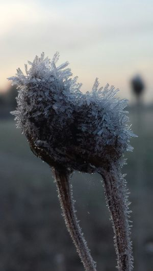 Happy Humpday! ? Hope you have a wonderful day Streamzoofamily EyeEm Best Shots Wintertime Winter Wonderland Beautiful EyeEm Gallery Frosty Goodness Frozen Photography For My Friends That Connect