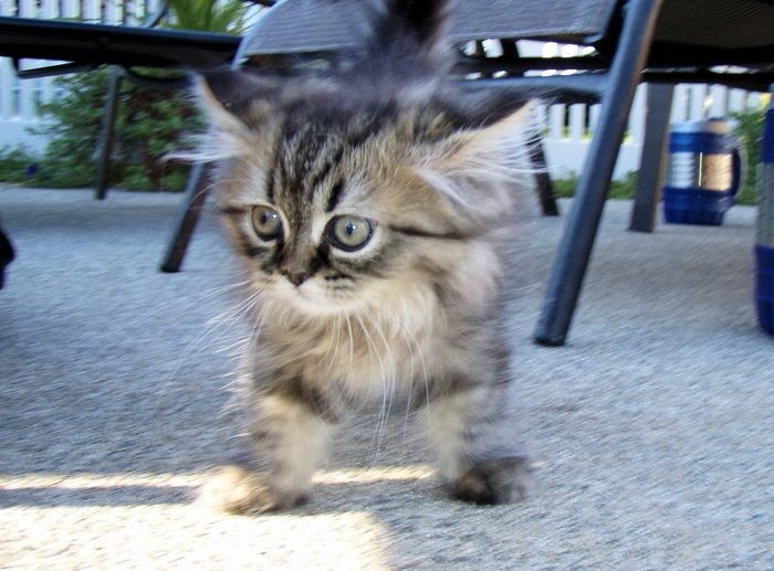 Kitty Kitten Cat Cats Pets Cute Pets Pet OpenEdit Enjoying Life Today's Hot Look