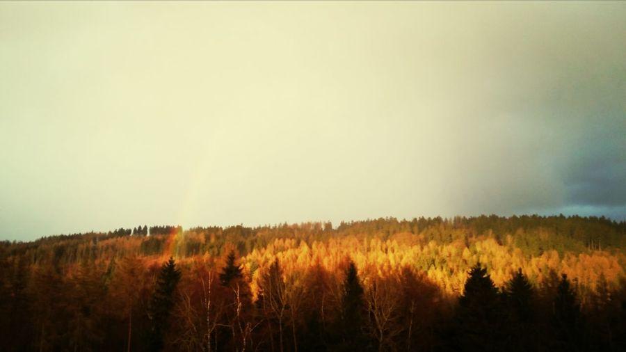 Herbst auf der Rotteröderhöh
