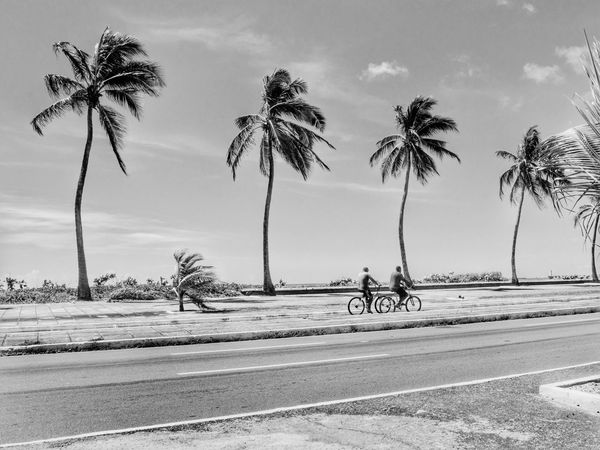 Traveling Home For The Holidays Brazil Palm Tree Beach Outdoors Sand Tree Day Sky Sea Nature Brazilian Gallery Beachphotography Beach Life Maceió Maceió, AL Maceió - AL Maceió - Alagoas -Brasil Maceiobeach Maceió, Alagoas Palm Trees Blackandwhite Blackandwhite Photography Black & White Black And White
