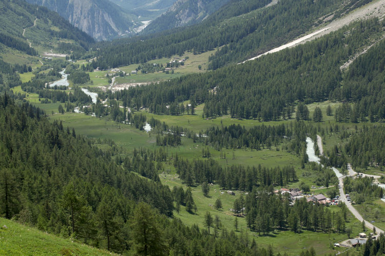 Scenic view of pine trees in valley