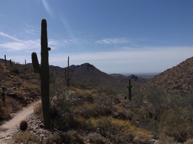 Hiking on desert trail. Path Scottsdale, AZ Beauty In Nature Blue Sky Day Desert Growth Landscape Mountain Nature No People Non-urban Scene Outdoors Saguaro Cactus Scenics Sky Tranquil Scene Tranquility EyeEmNewHere An Eye For Travel