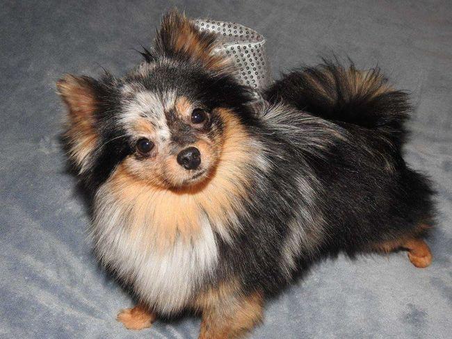Animal Animal Love Animal Family Animal Photography Domestic Animals Dog Photography Dog❤ Dog Lover Dogs Of EyeEm Dog Love