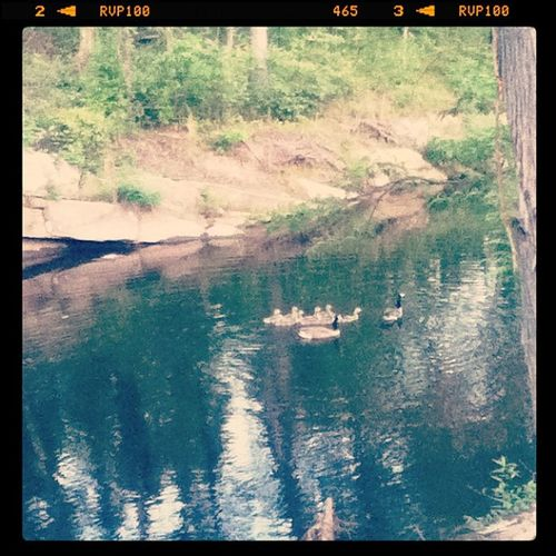 Livinthatlife this is right behind my house