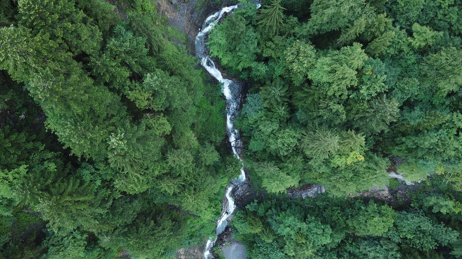 High angle view of waterfall amidst trees in forest