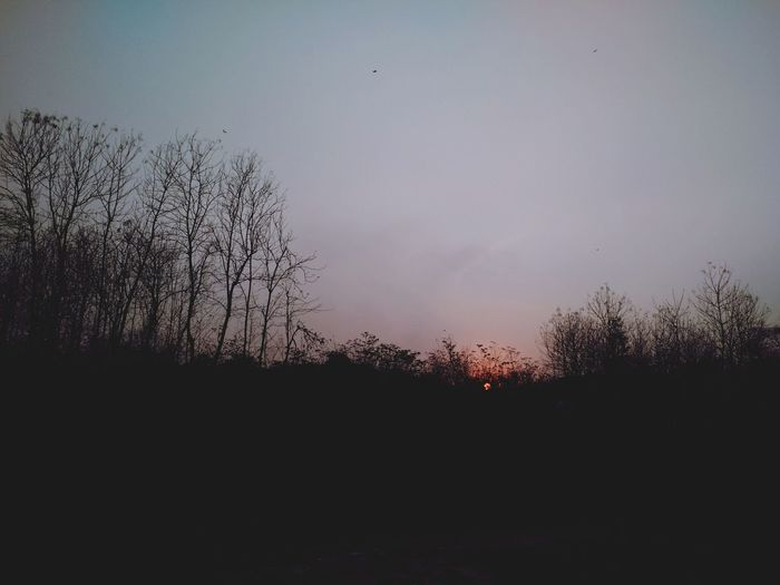 Sunset Xperiaphotography Xperiat2 Moment Trees Hutan