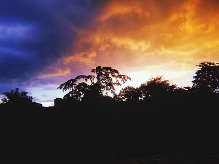 no caption Sky Silhouette Cloud - Sky Tree Plant Sunset Nature Low Angle View