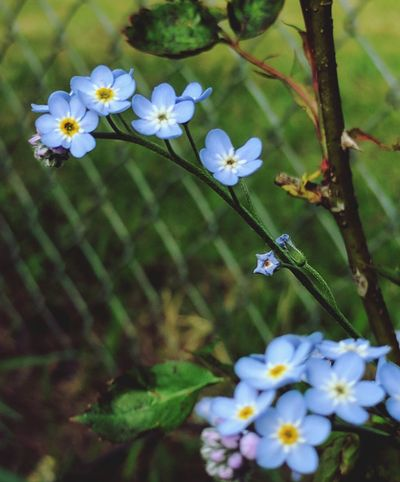 Flower Blossom Close-up Fragility Springtime Plant Beauty In Nature Leaf Flower Head Petal Day Growth No People Outdoors Love Of Flowers Piriwinkle Color Focus Of Foreground Tranquility