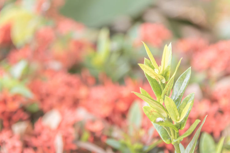 Plant Growth Beauty In Nature Plant Part Close-up Leaf Freshness Flowering Plant Flower Green Color No People Focus On Foreground Selective Focus Nature Day Fragility Vulnerability  Outdoors Beginnings Pink Color